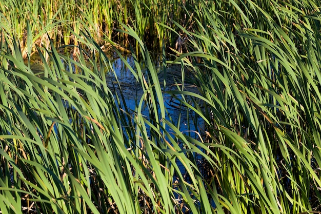 A área inundada é um pântano onde cresce um grande número de gramíneas e plantas.