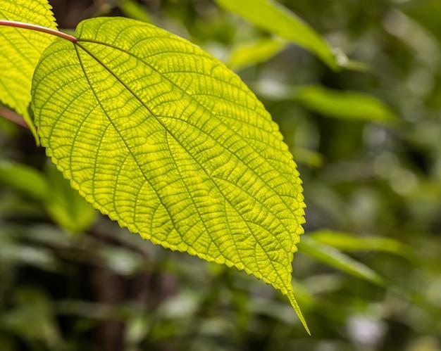 A arte da folha verde