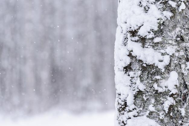 A árvore cobriu com a neve pesada na estação do inverno em lapland, finlandia.
