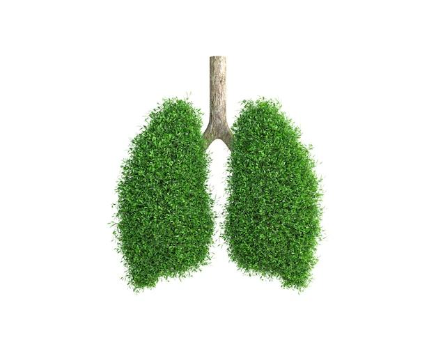 A árvore cresce na forma de um pulmão humano