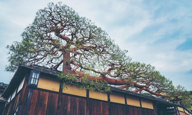 A árvore de bonsai maior em uma aldeia no japão, imagem de filtro vintage
