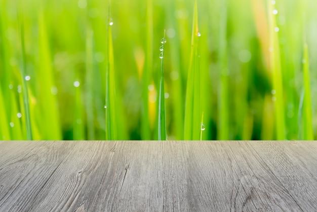 A árvore de madeira e de arroz tem o orvalho e a luz do sol na manhã.