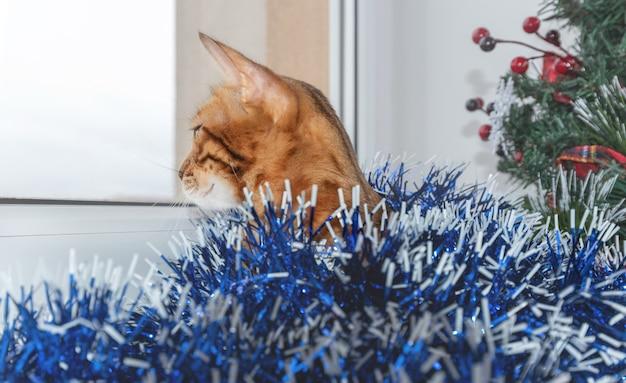 A árvore de natal e o gato doméstico de bengala olham pela janela.