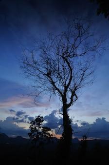 A árvore de volta no fundo azul
