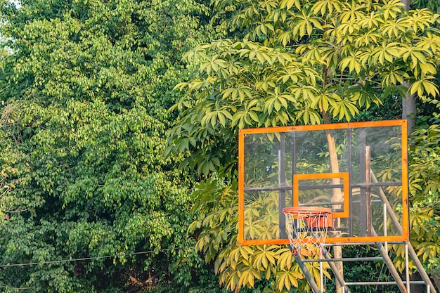 A árvore do fundo da aro de basquetebol e aquela reflete a luz solar na manhã.