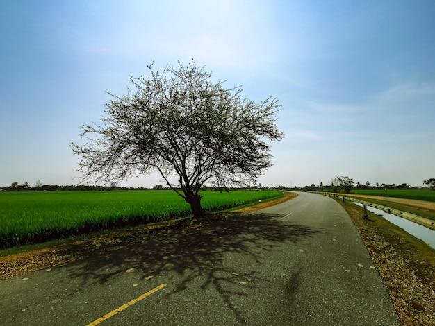 A árvore é isolada do sol ao meio-dia.
