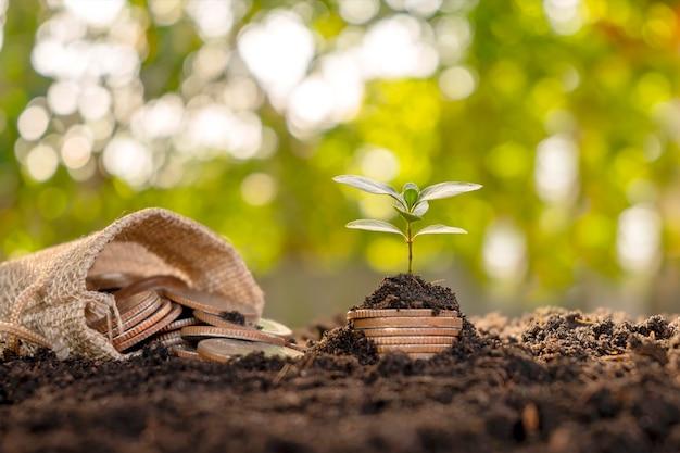 A árvore está crescendo da pilha de dinheiro e dinheiro que sai do bolso, ideias para economizar dinheiro