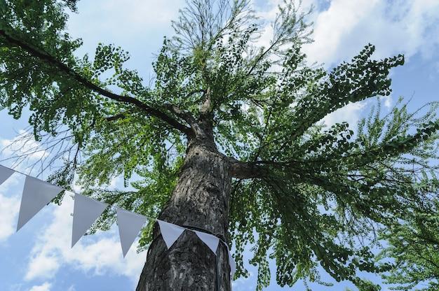 A árvore está no fundo do céu. vista inferior da árvore. as flâmulas brancas são presas ao barril.