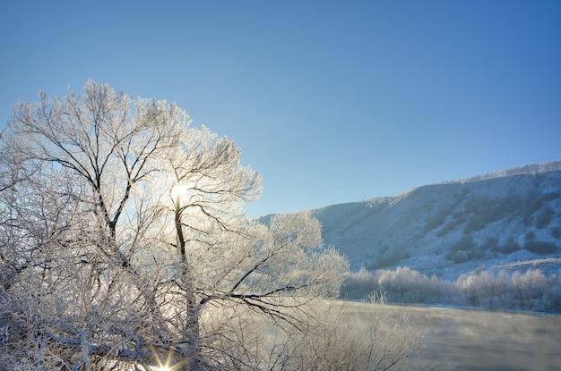 A árvore na margem do rio fica coberta de gelo no inverno