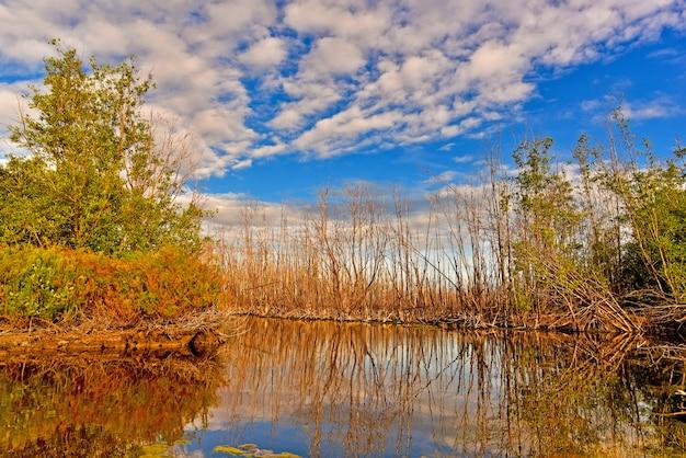 A árvore seca reflete a água no pântano sob o céu azul e a nuvem branca na véspera.