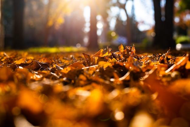 A árvore seca sae sobre no solo, velho, conceito e calor do outono.
