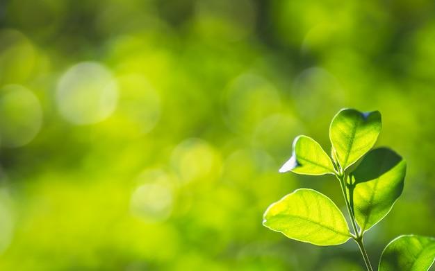 A árvore verde fresca da natureza do close up sae no fundo borrado das hortaliças do bokeh no jardim.