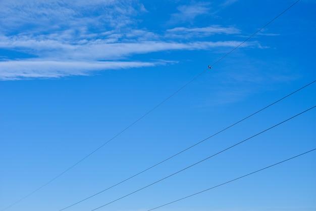 A ave senta-se nos fios da linha de energia contra o céu azul