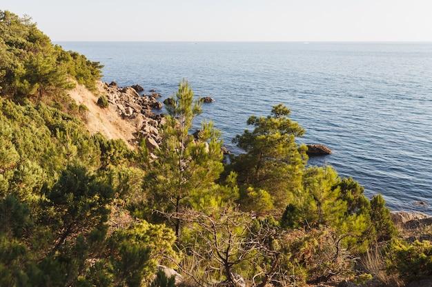 À beira-mar crescem zimbros em grandes pedras