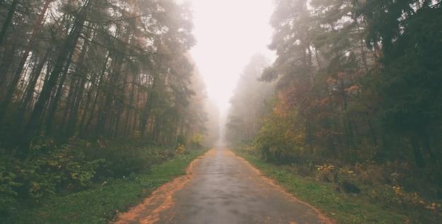 A bela avenida no parque de outono com muitas árvores e folhas amarelas no chão