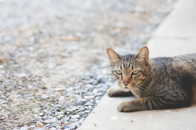 A bela imagem de um gato fofo está deitado no chão de cimento em frente da casa e olhando para mim com espaço de cópia.
