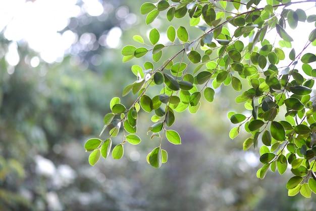 A bela luz do sol brilha através das árvores. na manhã da temporada