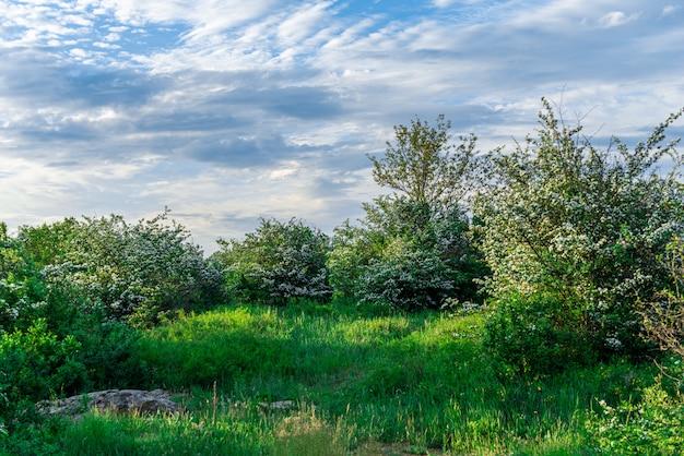 A beleza da natureza em migiya, ucrânia