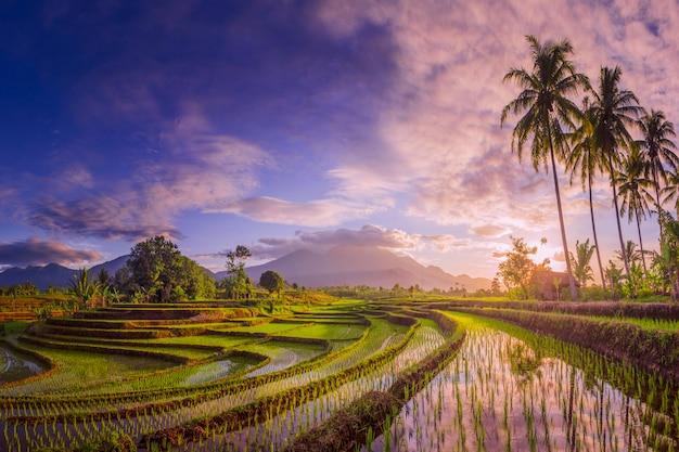 A beleza do panorama matinal de nevoeiro com o nascer do sol e os campos de arroz