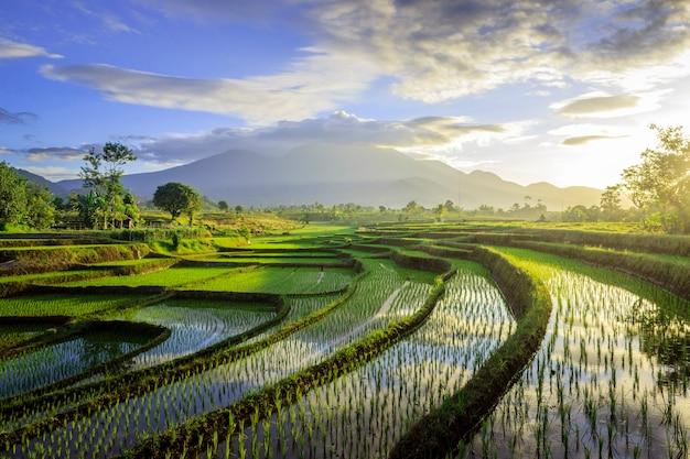 A beleza do panorama nebuloso da manhã com o nascer do sol e os arrozais