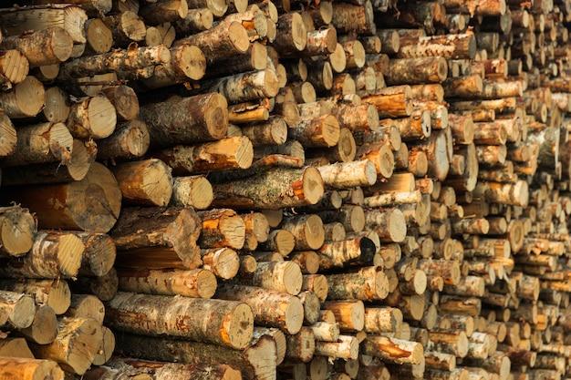 A bétula é empilhada em fileiras. desmatamento. foto de alta qualidade