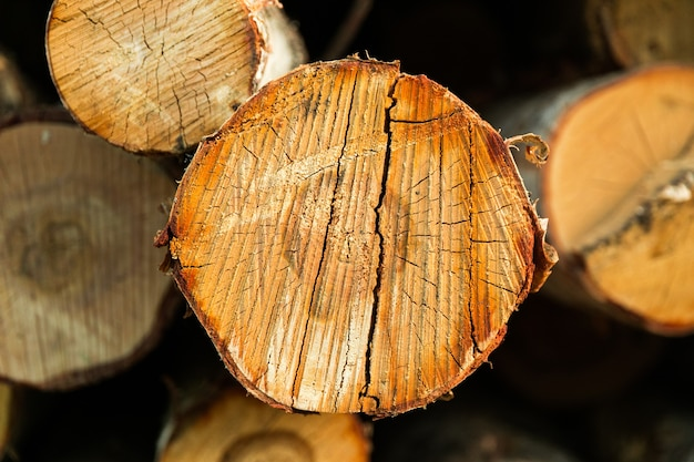 A bétula está em close-up. desmatamento. foto de alta qualidade