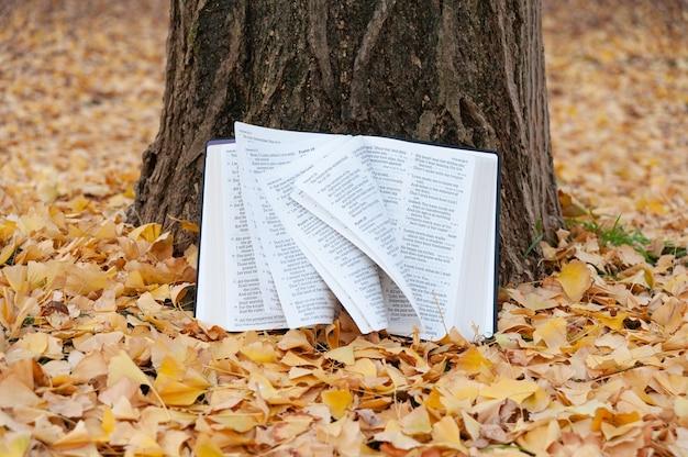 A bíblia sagrada aberta em salmos no tronco de uma árvore com as páginas girando ao vento no outono japonês com folhas amarelas caídas.