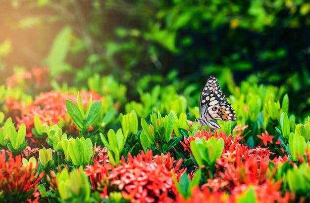 A borboleta na flor vermelha.