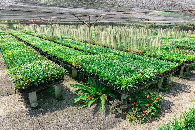 A bromélia é uma planta que é resistente ao clima quente e às condições de seca também.