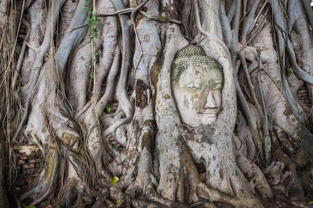 A cabeça da estátua de buddha na árvore enraíza em wat mahathat, ayutthaya, tailândia.