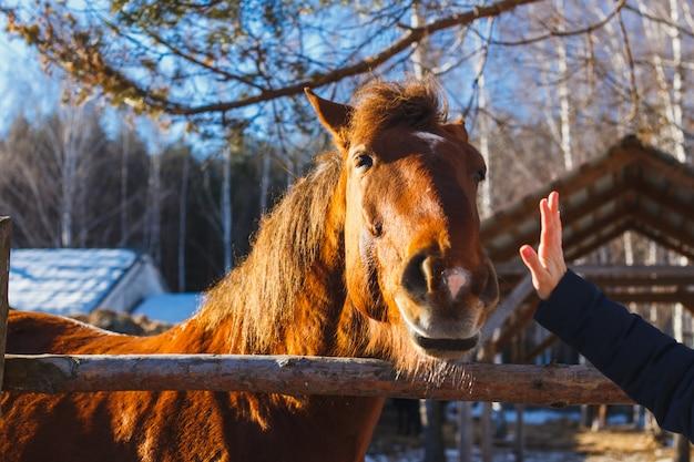 A cabeça de um cavalo vermelho se estende até a palma da mão