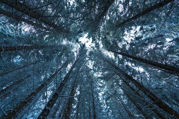 A câmera é direcionada para cima em direção às copas das árvores