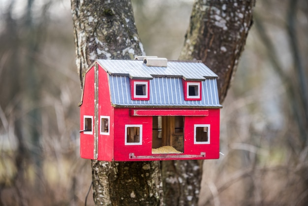 A casa de passarinho vermelha em uma árvore na floresta de primavera