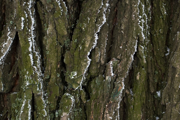 A casca da árvore na neve