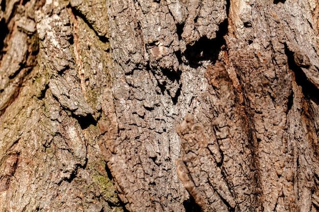 A casca da velha árvore. fundo