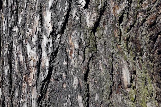 A casca de uma árvore com as características de sua estrutura