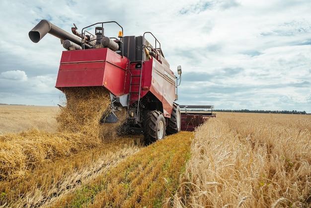 A ceifeira-debulhadora colhe trigo maduro. orelhas maduras do campo de ouro no fundo do céu nublado laranja do sol. . conceito de rica colheita. imagem de agricultura