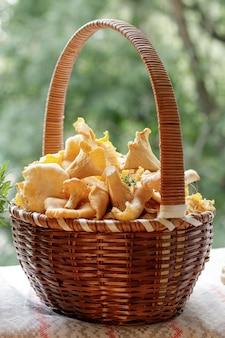 A cesta está cheia de cantarelos frescos da floresta
