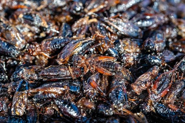 A cigarra frita é um dos alimentos tradicionais tailandeses locais normais na tailândia. eles são fritos até atingirem um estado de crocância completa, muito salgados e comidos como um lanche enriquecido com proteínas