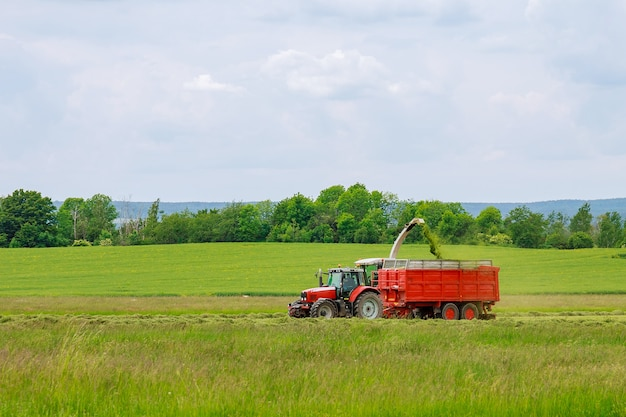 A colheitadeira coleta grama recém-cortada em um reboque de trator para transporte.