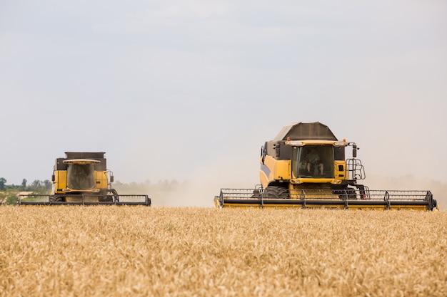 A colheitadeira coleta grão de trigo no campo.