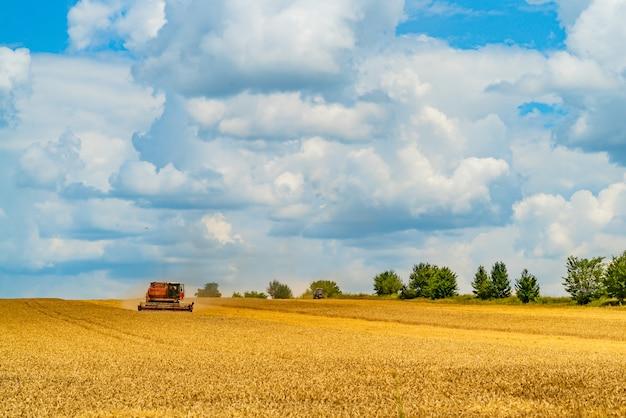 A colheitadeira colhe colheitas de grão no verão em tempo morno o dia todo