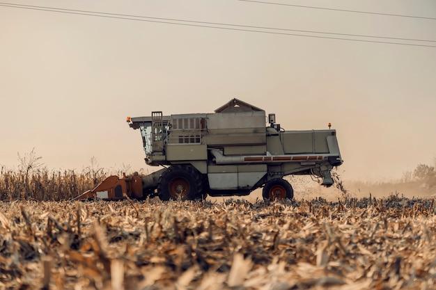 A colheitadeira no milharal em uma tarde ensolarada de outono está colhendo com capacidade total. agricultura, cultivo e colheita