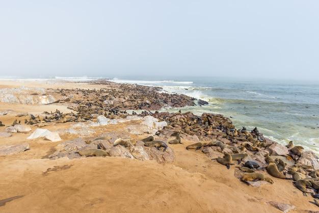A colônia de focas na cape cross, na costa atlântica da namíbia, áfrica.