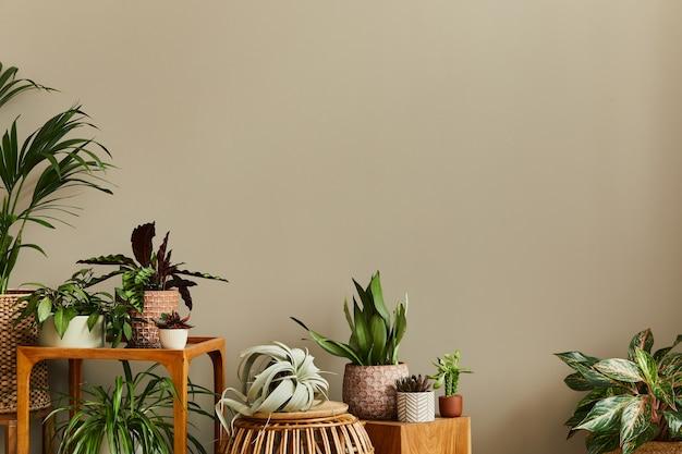 A composição elegante do interior do jardim doméstico preenchia muitas plantas bonitas, cactos, suculentas e plantas de ar em vasos de design diferente