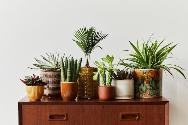 A composição elegante do interior do jardim em casa encheu um monte de belas plantas, cactos, suculentas, plantas de ar em vasos de design diferente. conceito de jardinagem doméstica selva doméstica. copiar spcae.