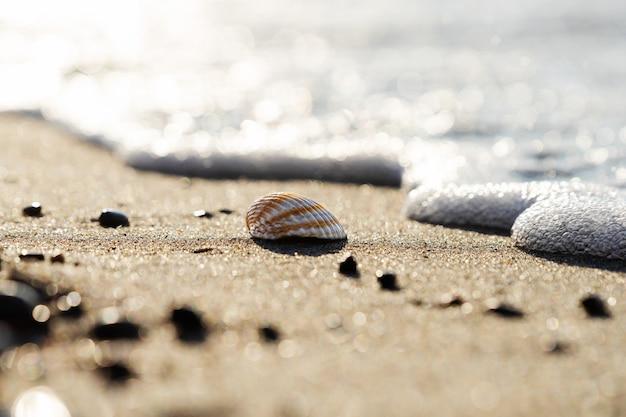 A concha encontra-se em uma praia arenosa. foco seletivo.