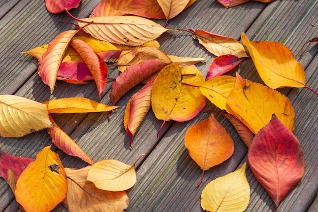 A cor seca do inclinação do outono sae no assoalho.