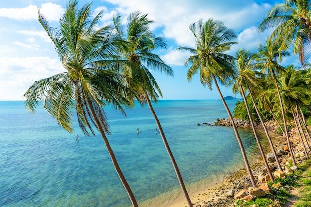 A costa de uma ilha tropical. praia à beira-mar. palmeiras pendem sobre a água