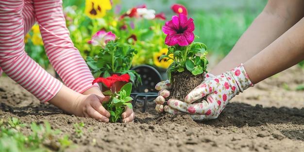 A criança e a mãe plantam flores no jardim. foco seletivo.